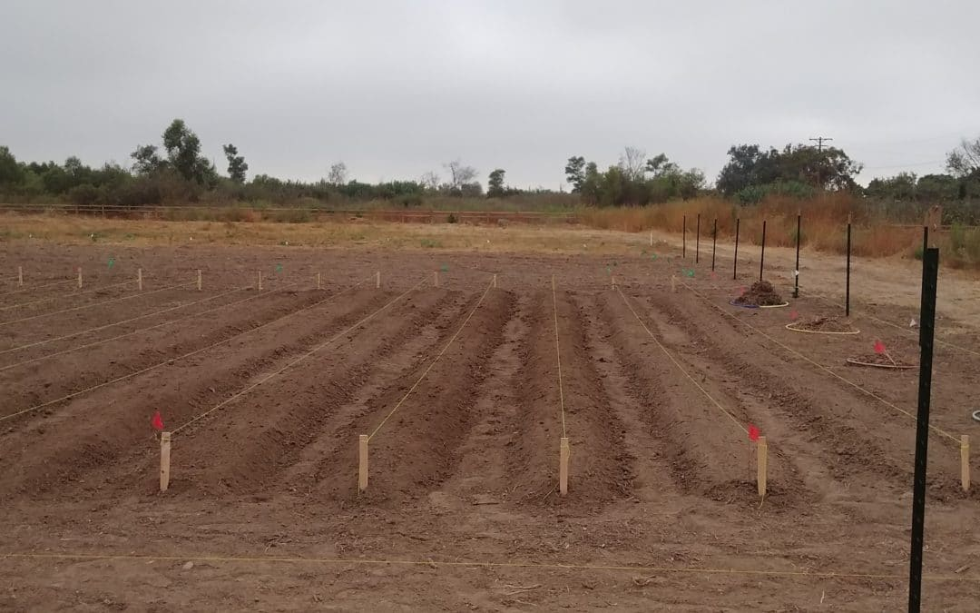 Meet our Carbon Farming Demonstration Project!